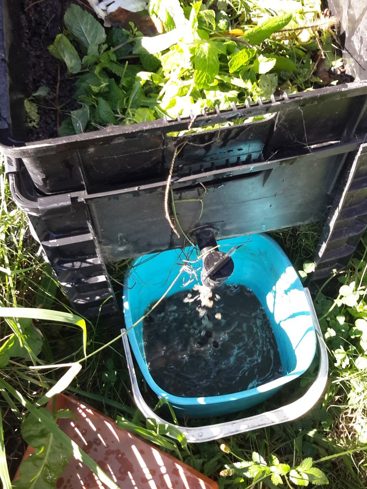 A worm farm with lid off di s playing food scraps on top layer of worm castings. Worm tea flows from tap into a pale blue square bucket on ground underneath. Bright green weeds fill in space around image of worm farm and bucket.
